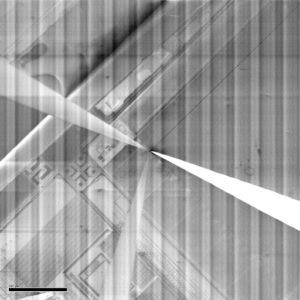 60 Hz Banding Scanning Electron Microscope EMI